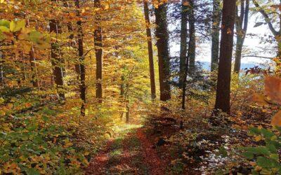 Zuhause regenerieren wie im Wald